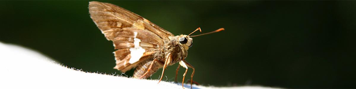 moth-gippsland-pest-control